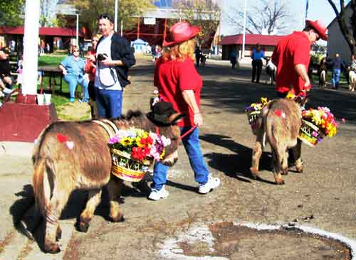 Donkeys in costume at Love Your Pet Expo 2008