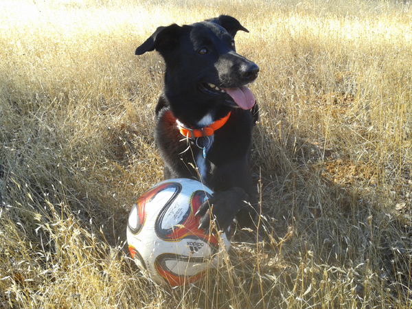 """ I am the best Lab/McNab soccer ball champion!"""