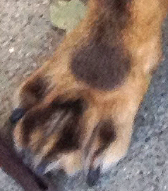Gibbs' Freckled Feet