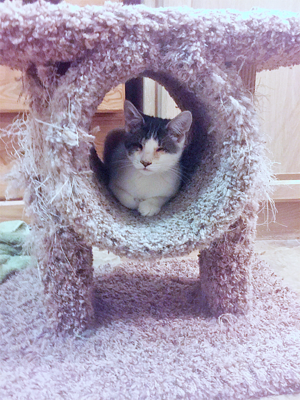 Newbie in cat tree